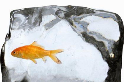 En TikTok ronda un video en el que una pecera y un pez se congelan.