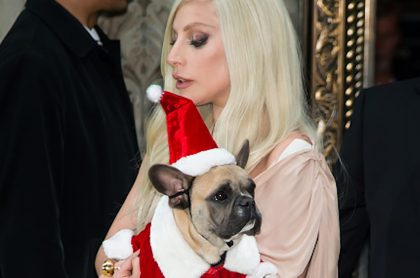 Lady Gaga y uno de sus perros.