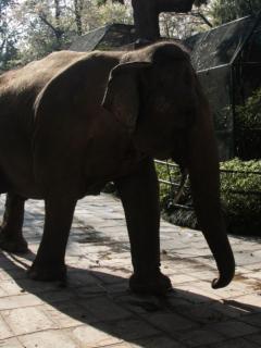Elefanta mata a trabajador de zoológico de un trompazo