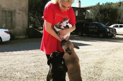 Los dos perros que le robaron a Lady Gaga pueden llegar a costar hasta 10.000 dólares (cada uno). La artista ofrece millonaria recompensa.