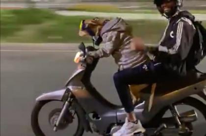 En Medellín se hizo viral el video de un perro que, en horas de la noche, conduce una moto con su amo como parrillero.