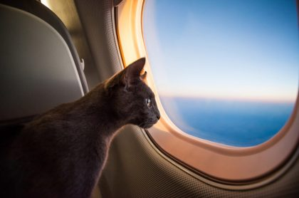 Avión mira por ventana de avión, ilustra nota de aterrizaje de emergencia por gato que entró a cabina de avión y atacó a piloto