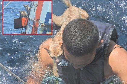 Captura de pantalla de marineros en Tailandia que rescataron a 4 gatos que estaban dentro de barco que se hundía y estaba en llamas