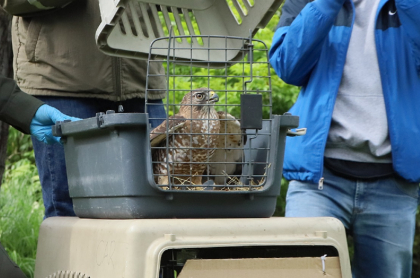 Liberación de animales en Bogotá