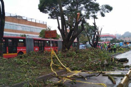 Imagen de árboles talados; Alcaldía de Bogotá talarámás árboles por obras en Transmilenio