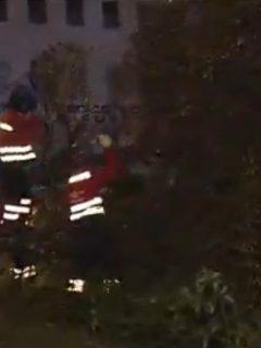 Tala de árboles en Bogotá llevó a jóvenes a pasar la noche trepados en ramas