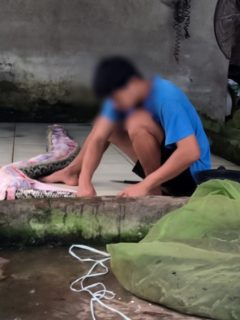Captura de pantalla de video de Peta en el que denuncia que granja infla a serpientes con aire comprimido para vender sus pieles, Vietnam
