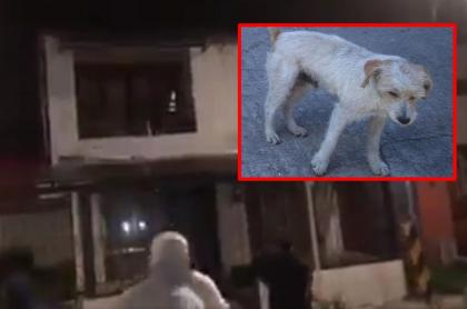 Ataque a piedra a la casa del hombre en Palmira acusado de matar a perro Pilín