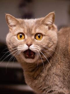 Imagen de un gato que ilustra nota; condenan a hombre que mató al gato de su familia en Sabanalarga, Atlántico