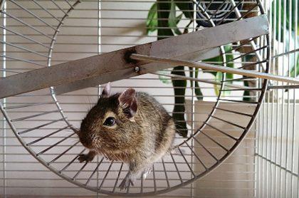 La carrera de la rata nos mantiene en el mundo de las deudas.