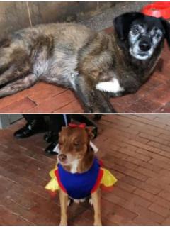 Casi expulsan del Palacio de Justicia a dos perras que llevaban ocho años allí.
