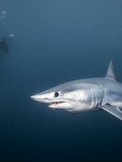 Tiburón mordió a niño de nueve años en Miami Beach.