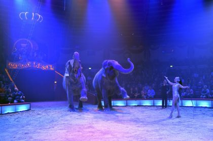 Elefantes de circo, ilustran nota de video de pelea de 2 elefantes en circo de Rusia sacó corriendo a asistentes