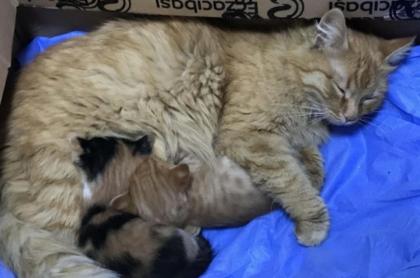 Captura de pantalla de video de gata que lleva a sus crías a clínica para que le abran los ojos