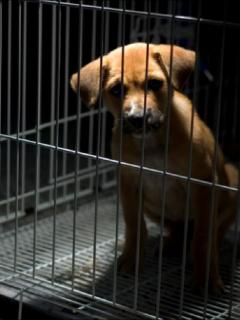Imagen de un perro enjaulado, que ilustra caso de maltrato animal en Semana Santa