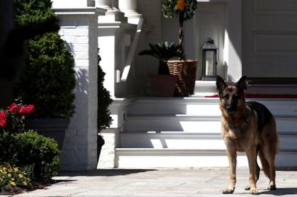 Champ, el perro mordelón de Joe Biden.