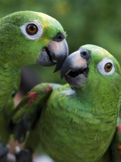 El centro de ayuda de fauna y flora silvestre de la ciudad de Bogotá, es reconocido en América Latina como el más sofisticado.