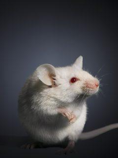 Ratones se están comiendo los cadáveres en Riohacha.