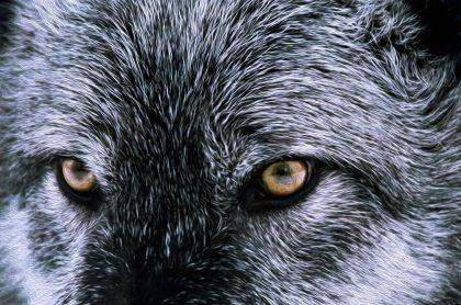 ¿De qué se trata la leyenda del 'Lobizón', también conocido como hombre lobo? ¿Qué es una leyenda? ¿Cómo se clasifican?
