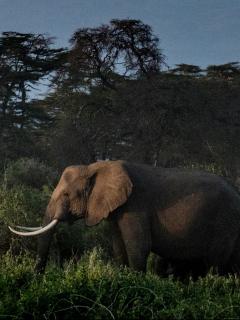 Imagen de elefantes ilustra artículo Elefantes en época de reproducción mataron a cazador en Sudáfrica