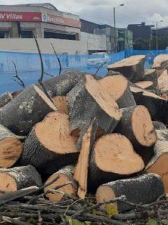 La tala de árboles en la Avenida 68 de Bogotá, donde irá la nueva troncal de Transmilenio continúa llevándose a cabo pese a las protestas de la ciudadanía.