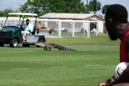 Foto de cocodrilo que se apareció en pleno entrenamiento del Toronto FC en Florida