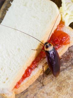 Cucaracha en sánduche, ilustra nota de video de Desconocido que lanzó más de 1.000 cucarachas a un restaurante por venganza