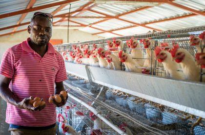 Paro nacional: compañía de huevos sacrificó a 400.000 gallinas a falta de comida
