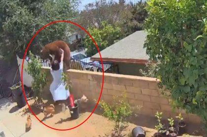Captura de pantalla de video viral de joven de 17 años empuja a oso para salvar a sus perros