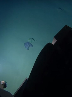 Captura de pantalla de video en el que encuentran plástico y basura en la tercera fosa oceánica más profunda