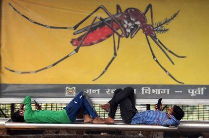 Mosquitos infectados con bacteria serían solución a casos de dengue en Colombia