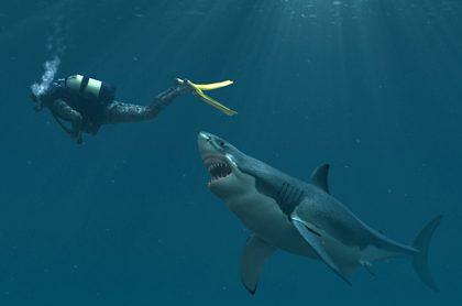 Encuentran a primer humano víctima de un tiburón, de hace 3.000 años