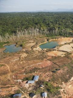 La deforestación en Colombia aumentó un 8 % en 2020.