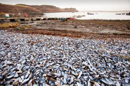 Mejillones y otros mariscos se cocinaron por ola de calor extremo en Canadá