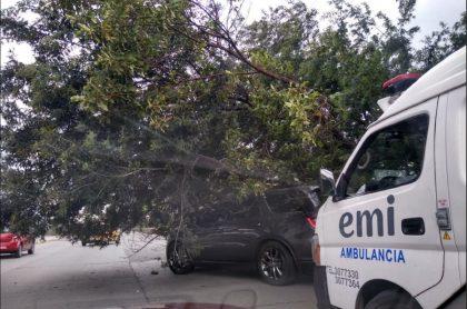 Accidente por árbol que cayó sobre camioneta en la Autopista Norte en Bogotá