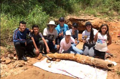 Hallan colmillo de mastodonte de 1,86 metros, en Norte de Santander